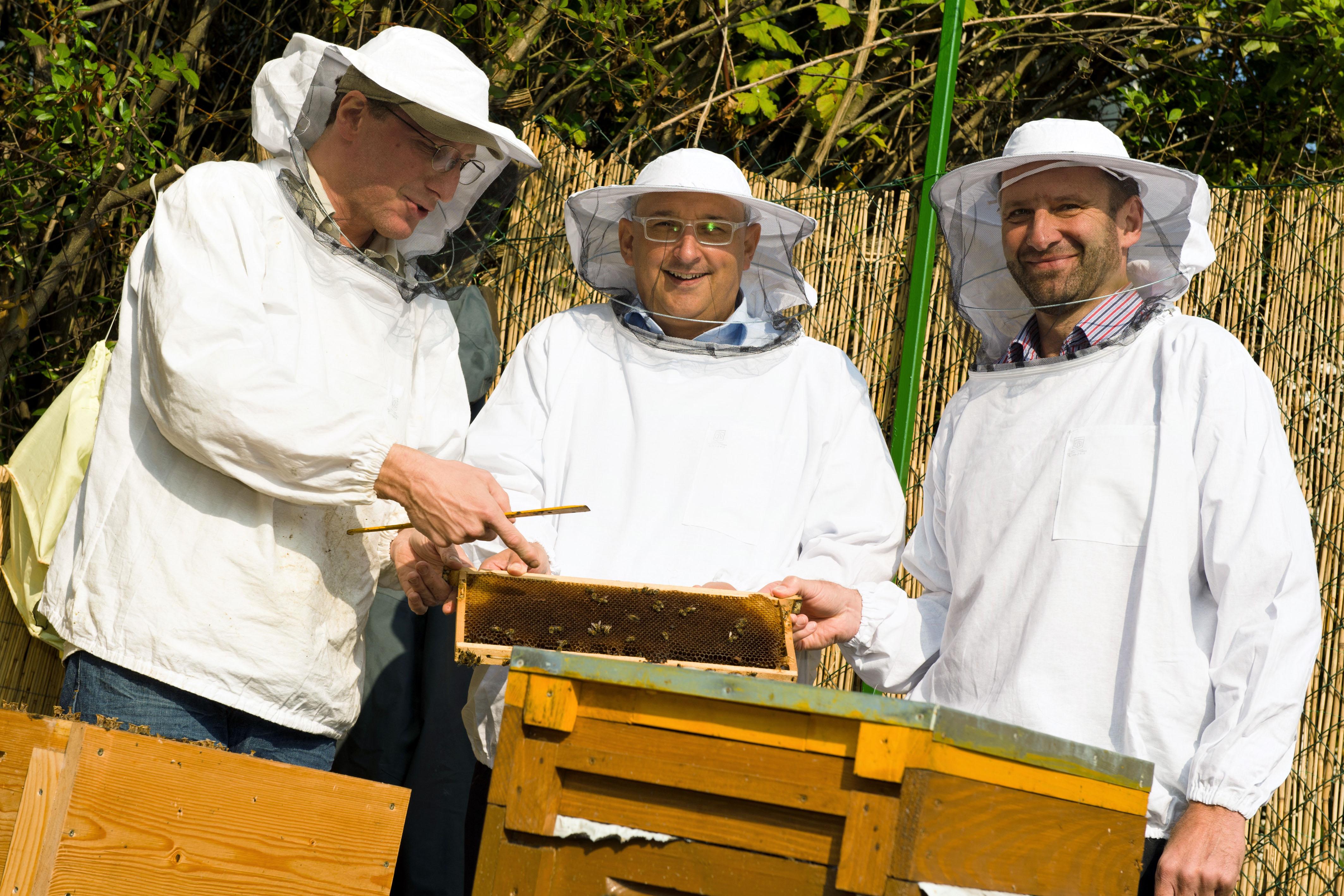 Erste Honigernte auf HDI Versicherung AG Firmengelände
