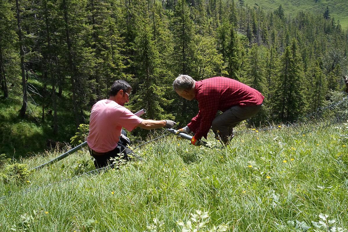 Alpiner Schutzwaldpreis